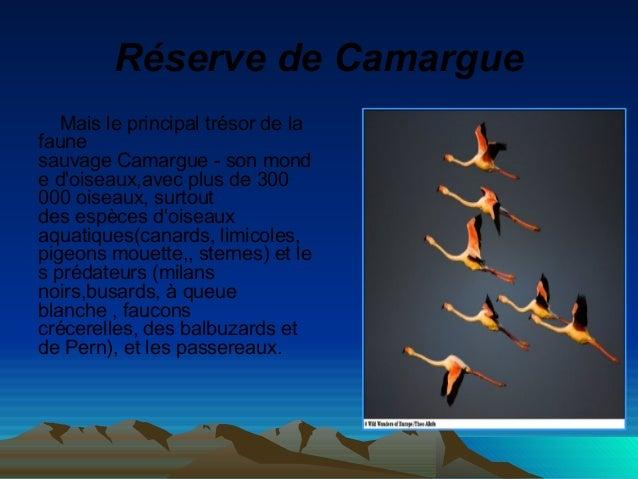 RéservedeCamargue Mais le principal trésor de la faune sauvage Camargue - son mond e d'oiseaux,avec plus de 300 000 oise...