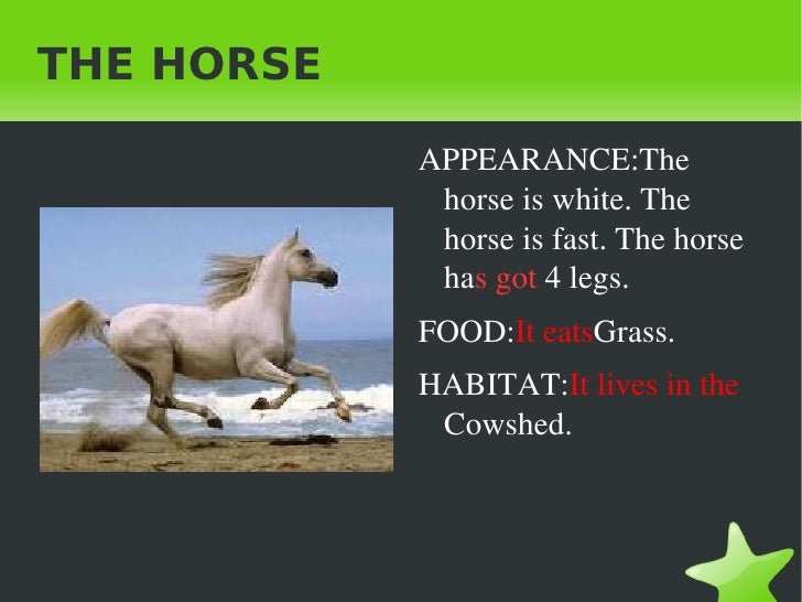 THE HORSE <ul><li>APPEARANCE:The horse is white. The horse is fast. The horse ha s got  4 legs.
