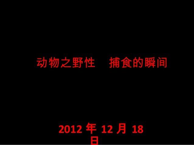 动物之野性    2012  捕食的瞬间  年 12 月 18