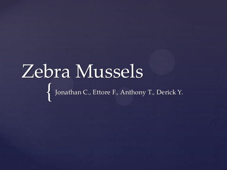Zebra Mussels<br />Jonathan C., Ettore F., Anthony T., Derick Y.<br />