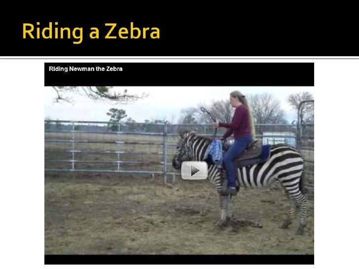 Zebras br 11 toneelgroepblik Images