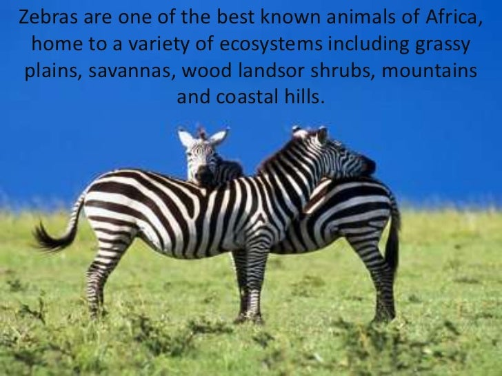 Zebras areone of thebest knownanimalsof Africa, home toa varietyof ecosystems includinggrassy plains, savannas,woo...