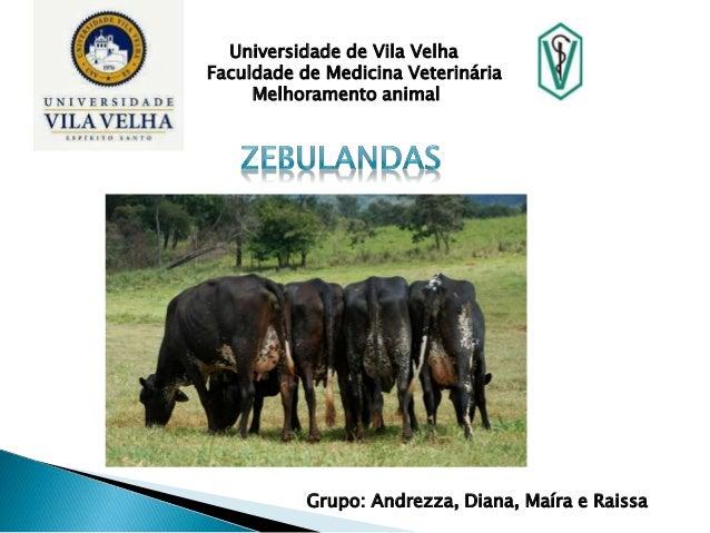 Universidade de Vila Velha  Faculdade de Medicina Veterinária  Melhoramento animal  Grupo: Andrezza, Diana, Maíra e Raissa