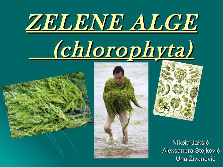 ZELENE ALGE   (chlorophyta) <ul><li>Nikola   Jak šić </li></ul><ul><li>Aleksandra Stojković </li></ul><ul><li>Una Živanovi...