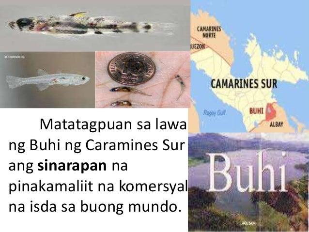 pinakamaliit na perlas sa boung mundo Moved permanently the document has moved here pinakamalaking bulaklak sa mundo na matatagpuan sa pilipinas | news | gma news online x.