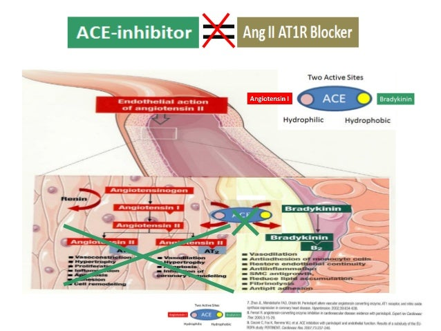 AT2 AT1 Apoptosis Endothelial Disruption Protecting the Endothelium & Intima
