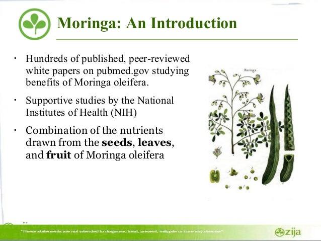The feasibility of moringa oleifera essay
