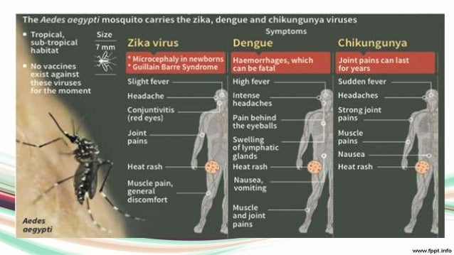 zikka virus, Muscles