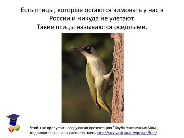 Картинки птиц которые зимуют у нас