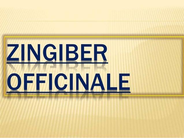 Ginger (Zingiber officinale) Slide 2