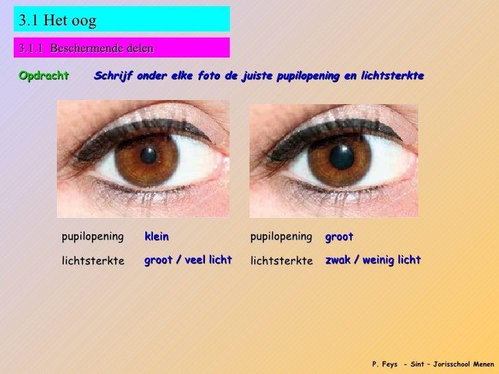 https://image.slidesharecdn.com/zintuigenbeeldvormingenoog-120515024238-phpapp01/95/zintuigen-beeldvorming-en-oog-4-728.jpg?cb=1337049890