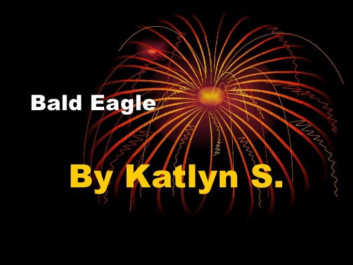 Bald Eagle By Katlyn S.