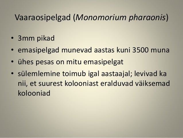 Vaaraosipelgad (Monomorium pharaonis) • 3mm pikad • emasipelgad munevad aastas kuni 3500 muna • ühes pesas on mitu emasipe...