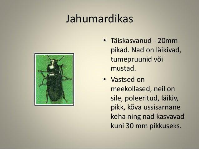 Jahumardikas • Täiskasvanud - 20mm pikad. Nad on läikivad, tumepruunid või mustad. • Vastsed on meekollased, neil on sile,...