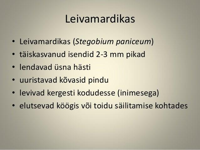 Leivamardikas • Leivamardikas (Stegobium paniceum) • täiskasvanud isendid 2-3 mm pikad • lendavad üsna hästi • uuristavad ...