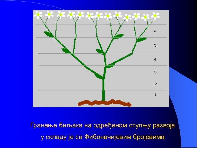 Гранање биљака на одређеном ступњу развоја у складу је са Фибоначијевим бројевима