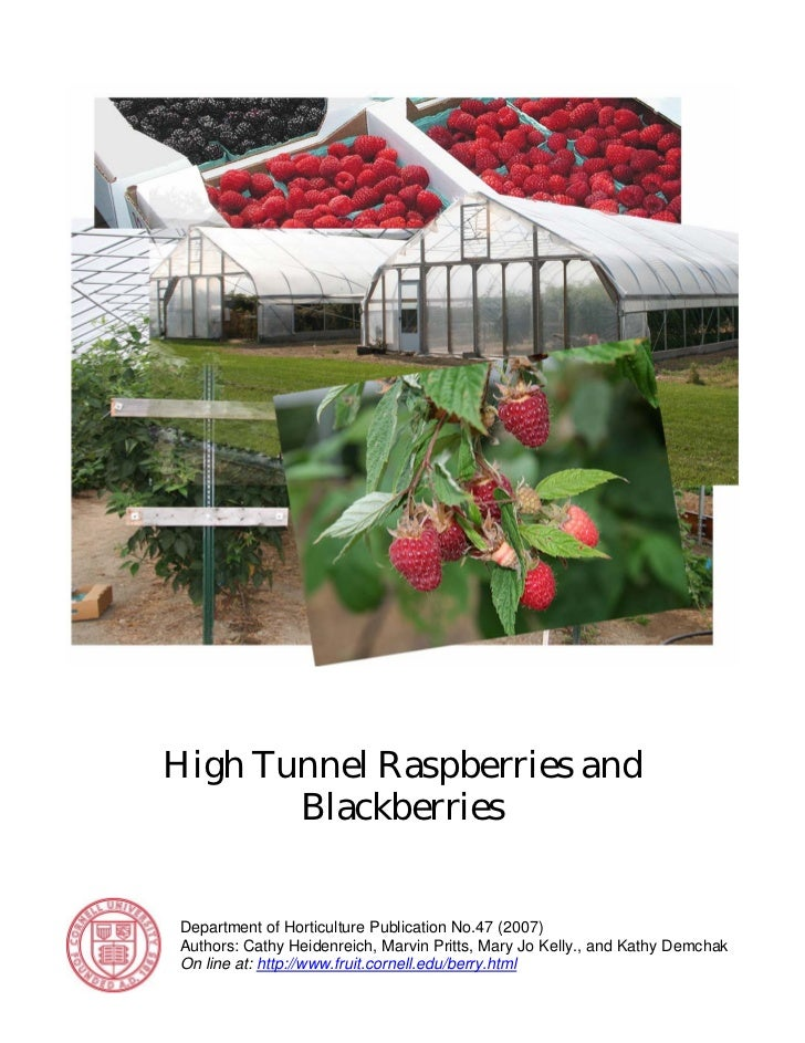 High Tunnel Raspberries and       BlackberriesDepartment of Horticulture Publication No.47 (2007)Authors: Cathy Heidenreic...