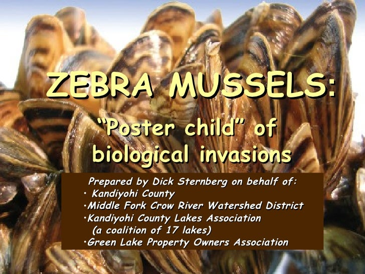 "ZEBRA MUSSELS:  ""Poster child"" of  biological invasions  Prepared by Dick Sternberg on behalf of: • Kandiyohi County •Midd..."