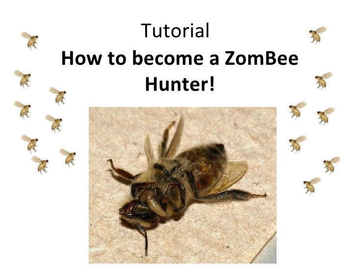 TutorialHow to become a ZomBee        Hunter!
