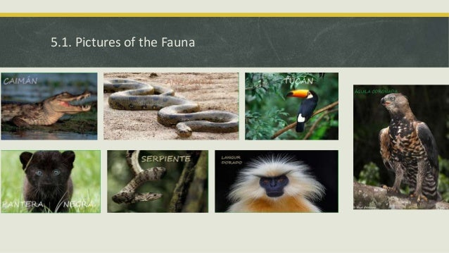 trees found in equatorial region