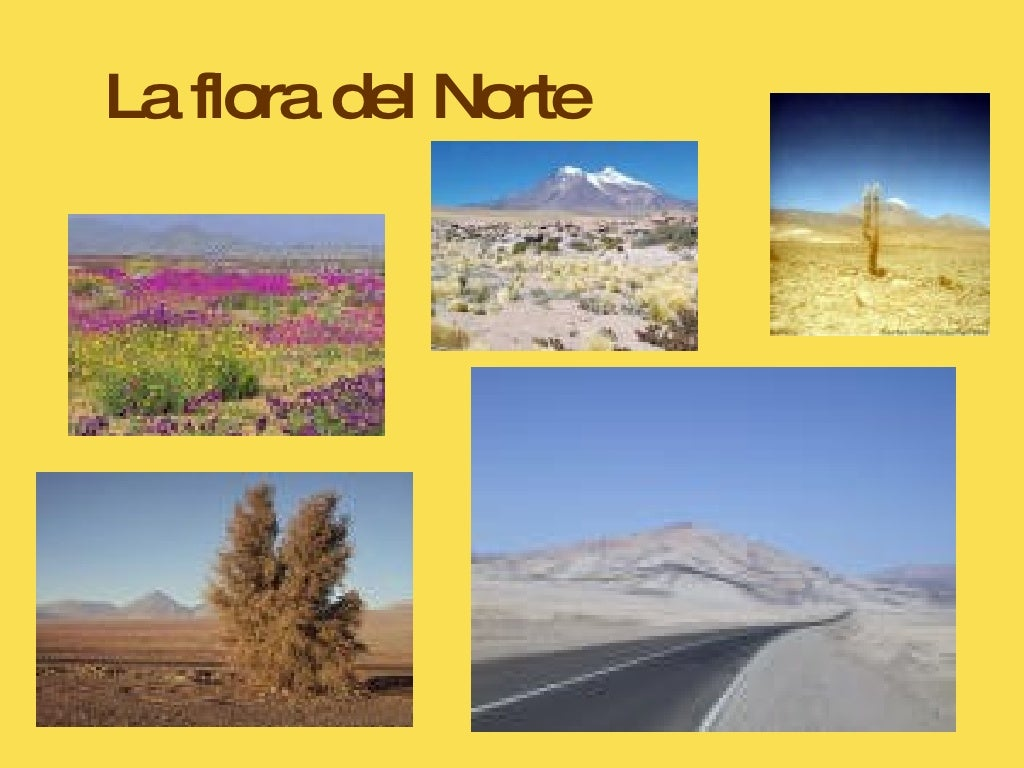 Zona norte for Acuarios zona norte