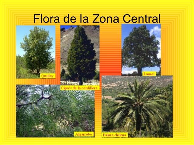 Zonas de chile for Piletas publicas en zona norte