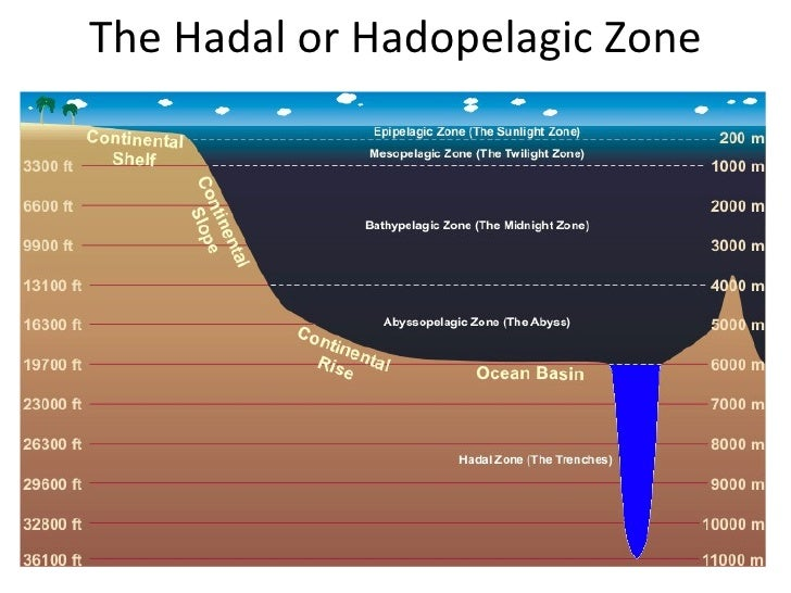 Zonation in the ocean powerpoint