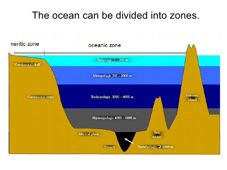 Ocean Zones Diagram English Product Wiring Diagrams