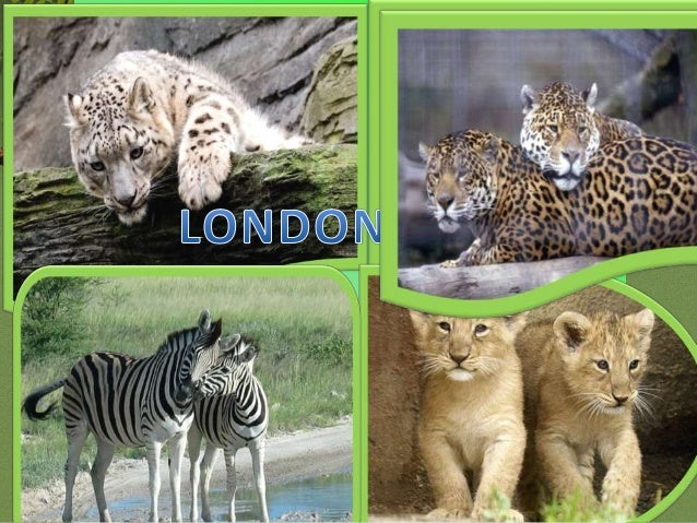 London Zoo is one of the most famous of all London attractions. It is situated in Regent's Park .