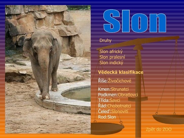 Zoo   BalcáRek Slide 2