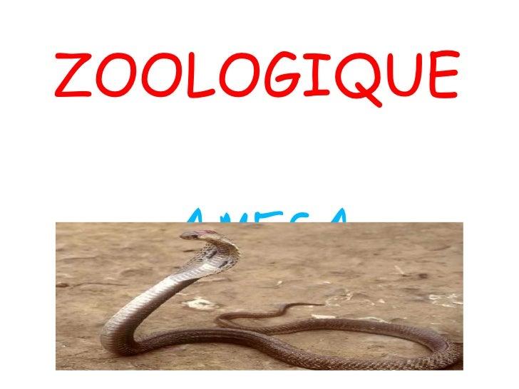 ZOOLOGIQUE AMECA
