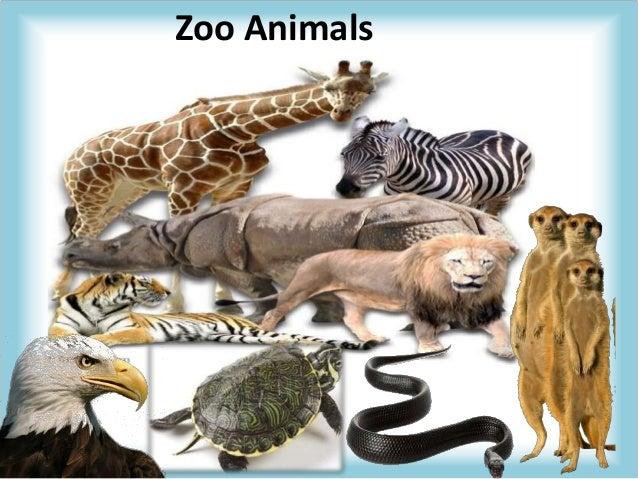 Zoo animals - Colorazione pagine animali zoo ...