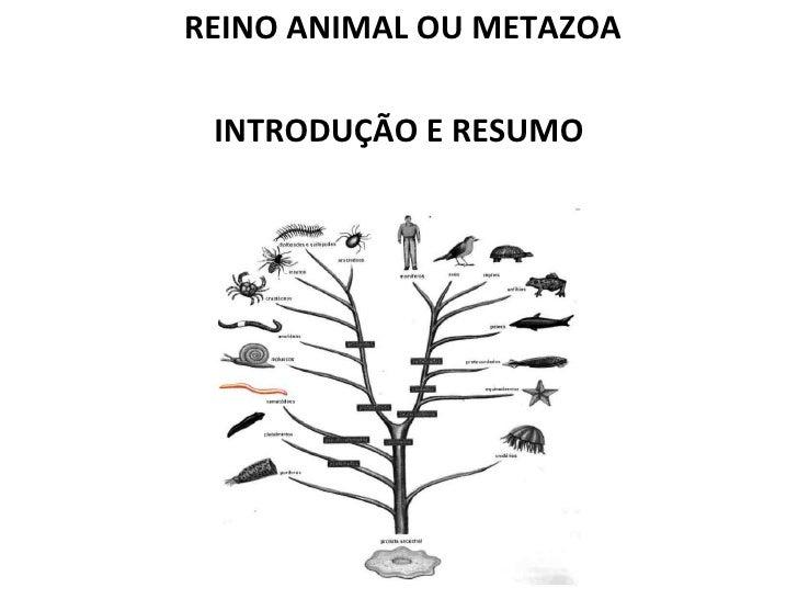 REINO ANIMAL OU METAZOA INTRODUÇÃO E RESUMO