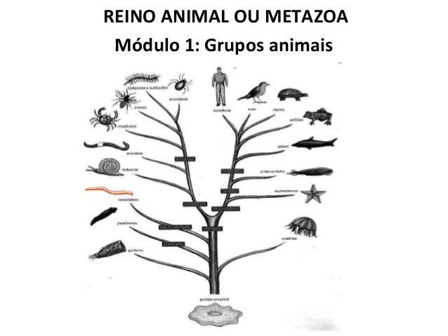 REINO ANIMAL OU METAZOA Módulo 1: Grupos animais