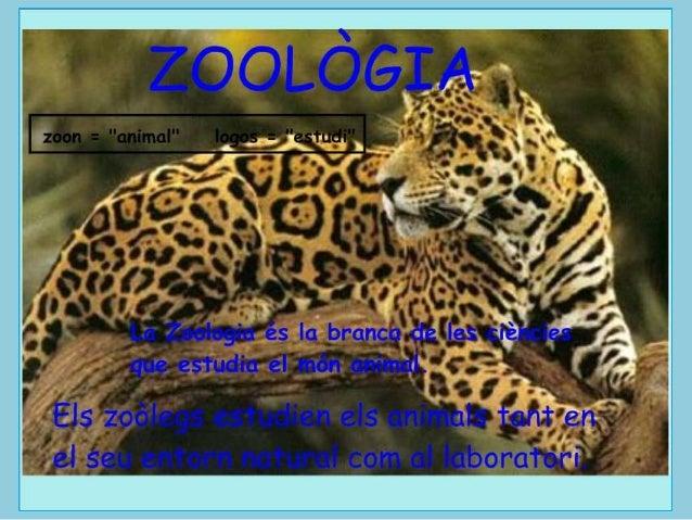 Zoologia. Vertebrats