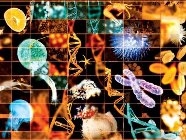 Filo Porifera(Poríferos)Filo Porifera(Poríferos)