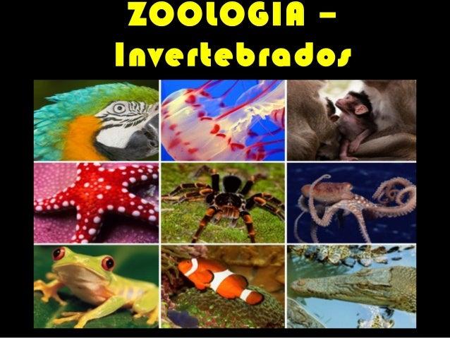 ZOOLOGIA –  Invertebrados