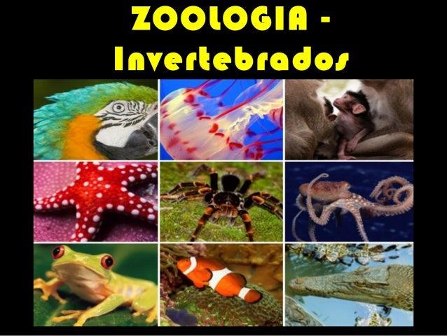ZOOLOGIA Invertebrados PROFESSOR VASCO