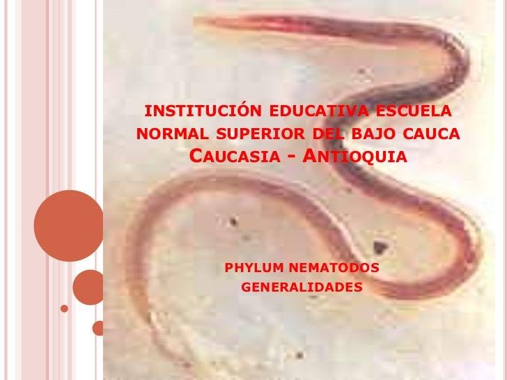INSTITUCIÓN EDUCATIVA ESCUELANORMAL SUPERIOR DEL BAJO CAUCA    CAUCASIA - ANTIOQUIA        PHYLUM NEMATODOS         GENERA...