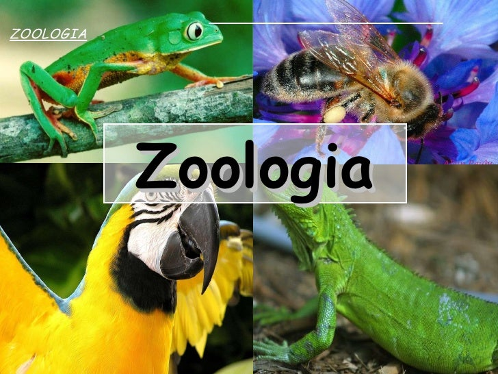 Zoologia Zoologia para o Vestibular Zoologia   ZOOLOGIA