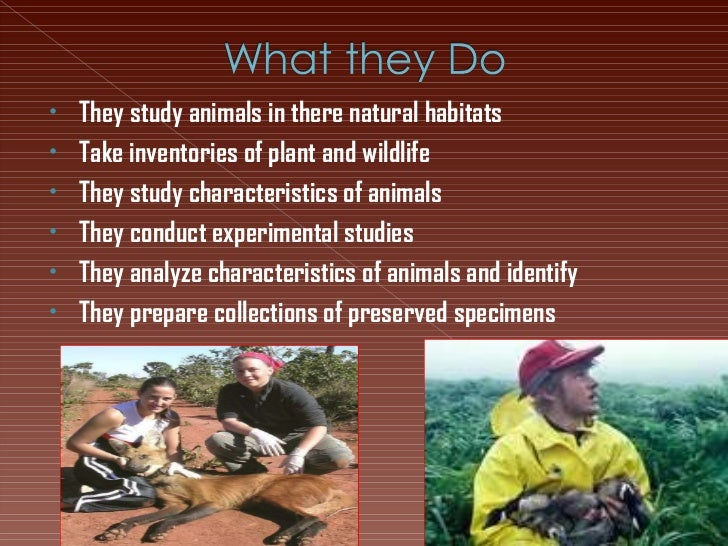 <ul><li>They study animals in there natural habitats </li></ul><ul><li>Take inventories of plant and wildlife </li></ul><u...