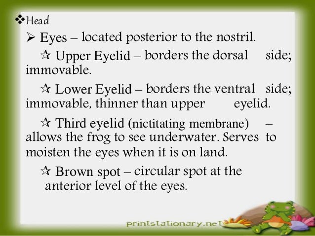Zoologyexternal Features Of The Frog Buccal Cavity