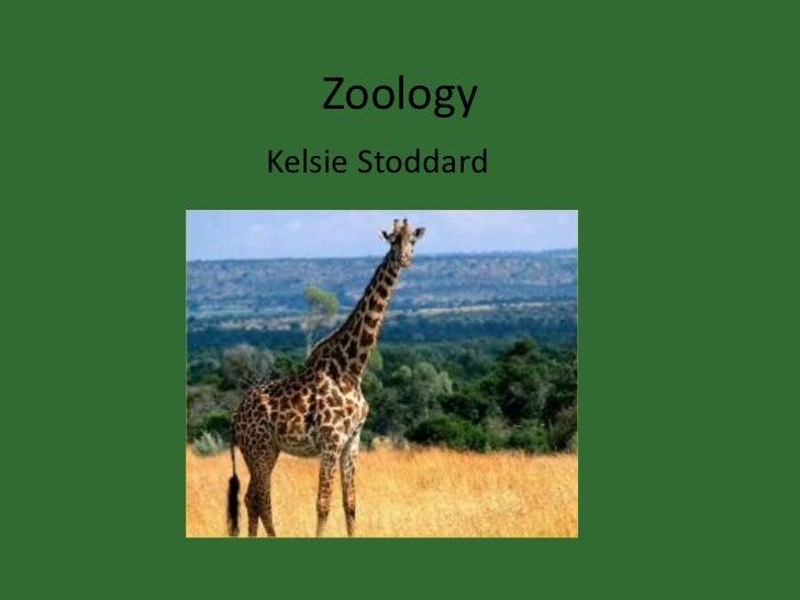 Zoology<br />Kelsie Stoddard<br />