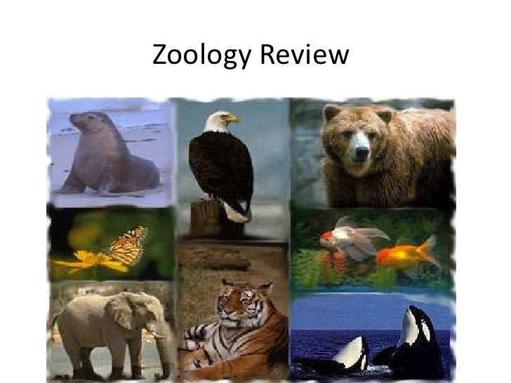 Zoology Review