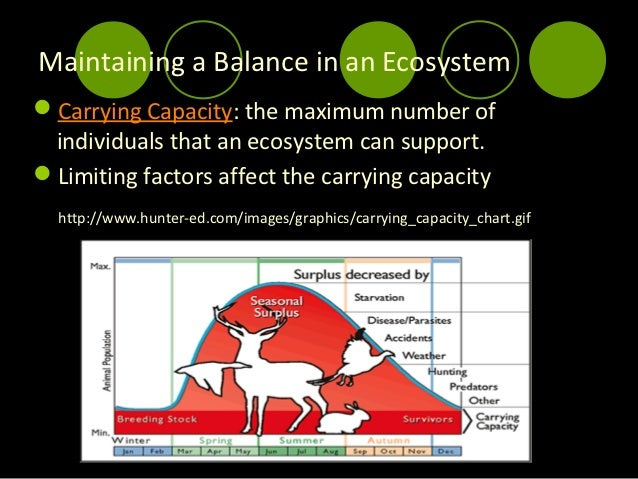 how is carrying capacity of an ecosystem affected