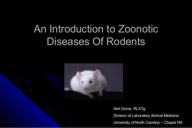 An Introduction to Zoonotic Diseases Of Rodents  Neil Grove, RLATg Division of Laboratory Animal Medicine University of No...