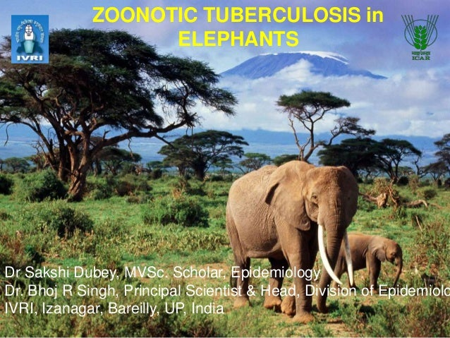 ZOONOTIC TUBERCULOSIS in ELEPHANTS  Dr Sakshi Dubey, MVSc. Scholar, Epidemiology Dr. Bhoj R Singh, Principal Scientist & H...