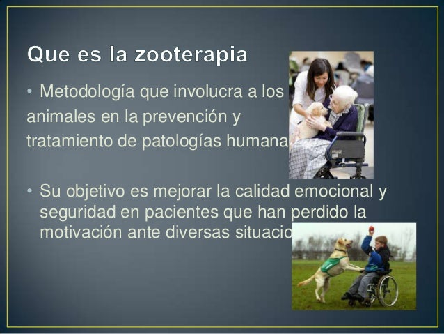 Zooterapia