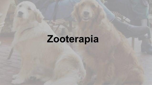Se entrenan animales para rehabilitación de  pacientes.