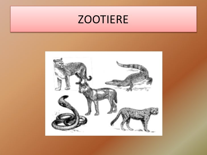 ZOOTIERE<br />
